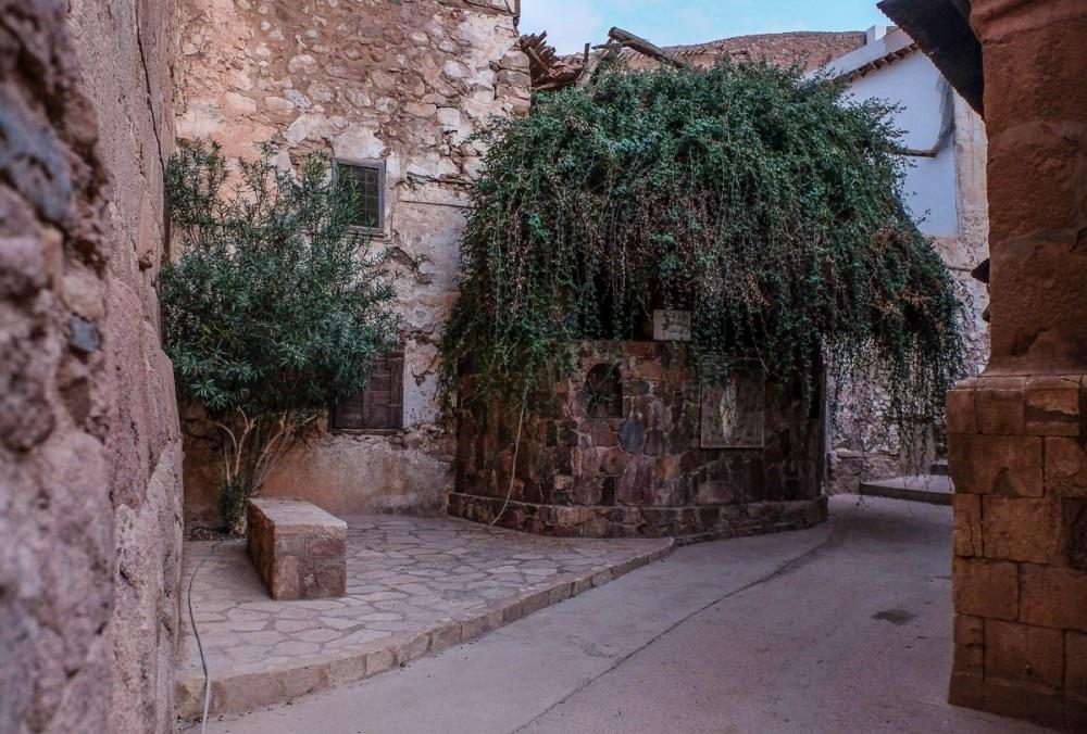 Neizgorivi grm iz Mojsijeva vremena i danas postoji
