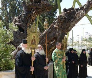 procesija-u-blizini-hrasta-mamre